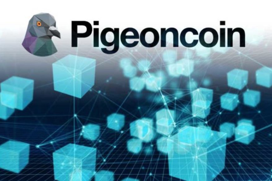 Hacker Learn the Hard Way after Spending Whole Day Hacking Pigeoncoin